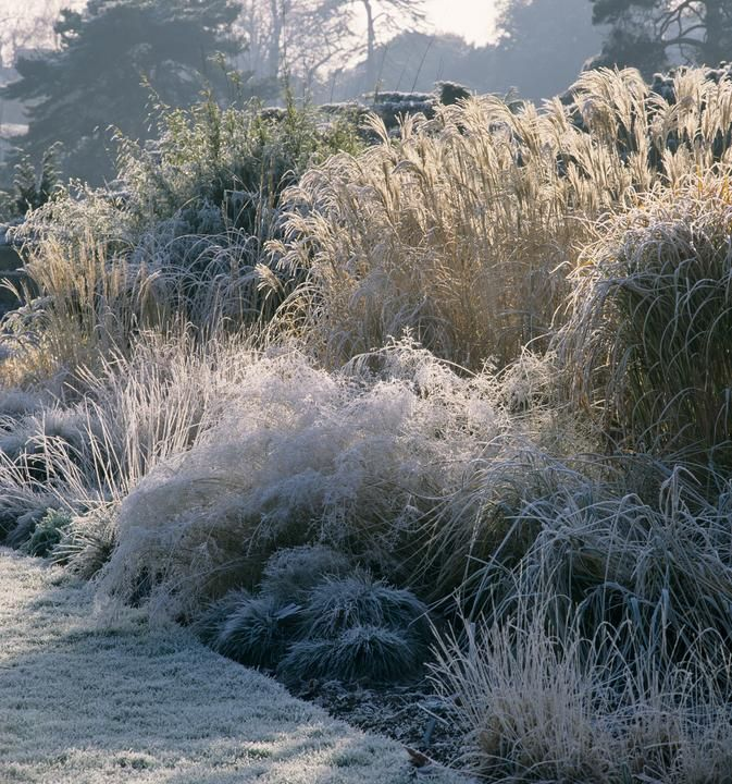 Morning frost in the Grass Gardens at Kew, the Royal Botanic Gardens in Richmond, England.