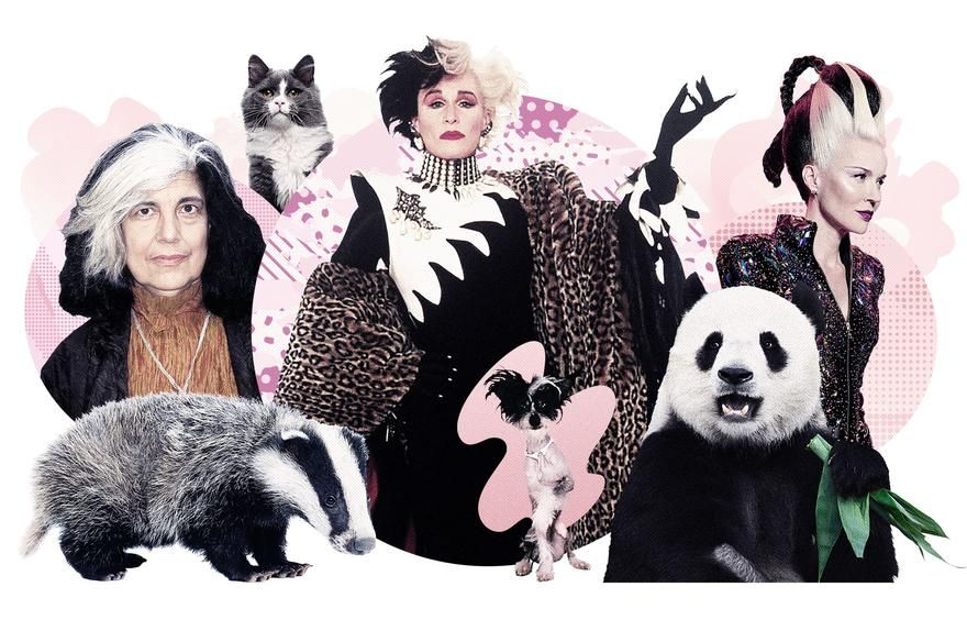 STREAK QUEENS Perhaps even more striking than allover gray is the skunk-like addition of one supremely stylish white streak. Just ask Susan Sontag, Cruella De Vil or Daphne Guinness. A brazen white streak can also connote magical powers in the cartoon world (think Rogue in 'X-Men').