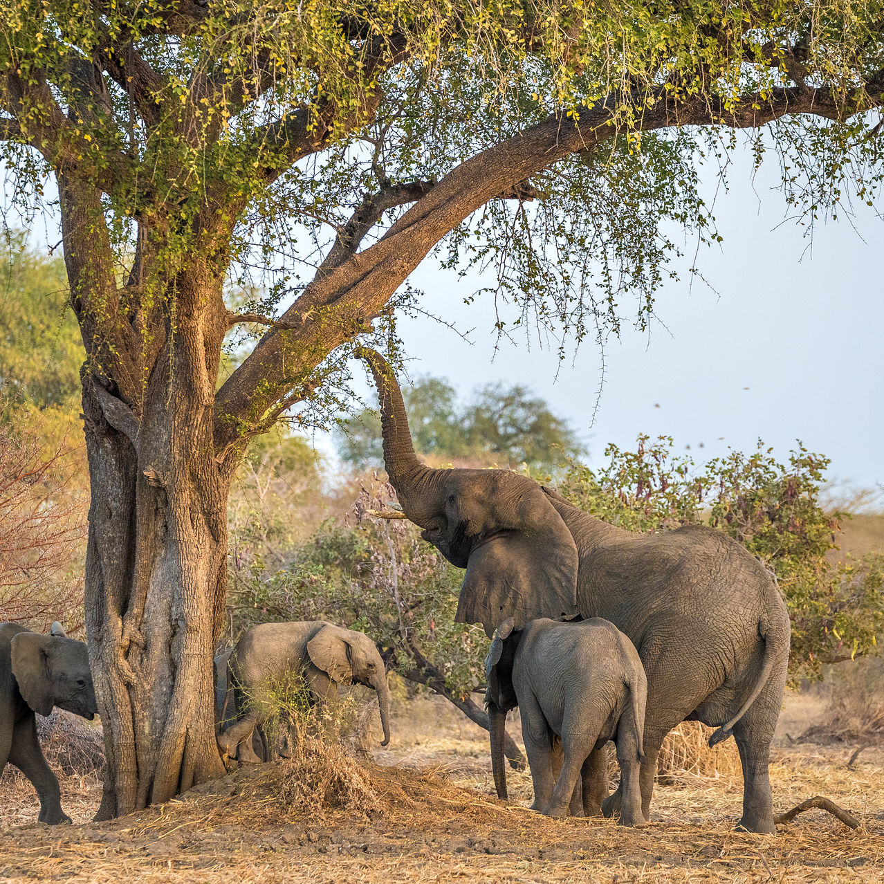 Zakouma National Park in Chad, one of the 15 parks and reserves currently managed by African Parks.