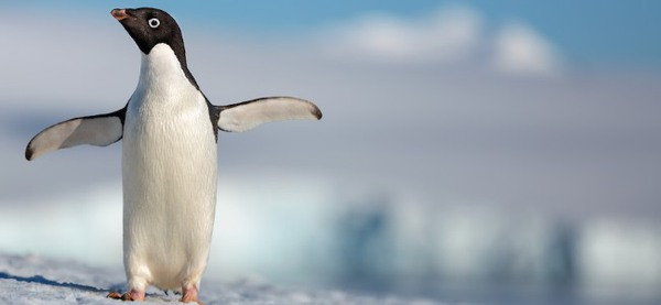 Penguins DisneyNature documentary