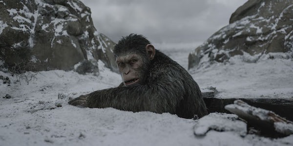 Caesar - War For The Planet of the Apes